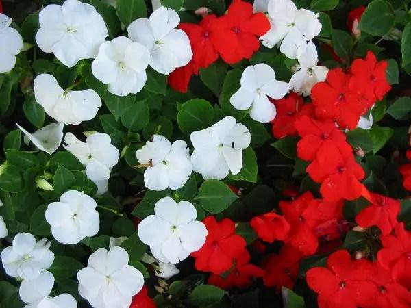 Flori care cresc la umbra in gradina