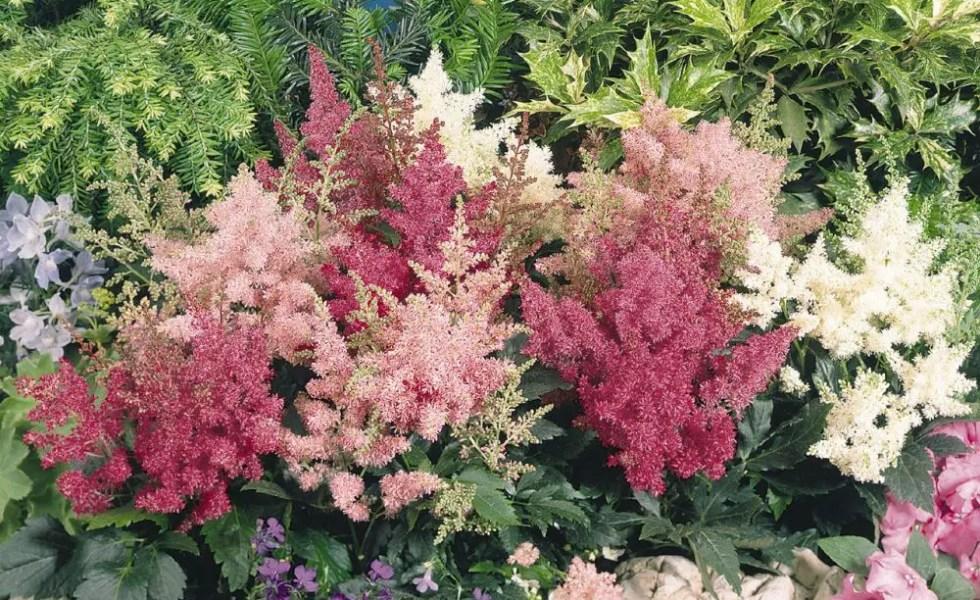 Top 10 flori care cresc la umbra - Shade tolerant flowers ...