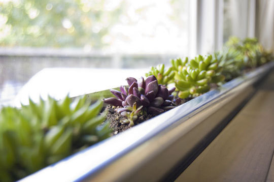 sfaturi pentru gradinarit in apartament la geam