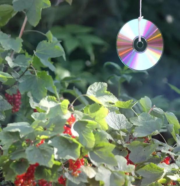 Ce poti face cu CD-uri si DVD-uri vechi acasa