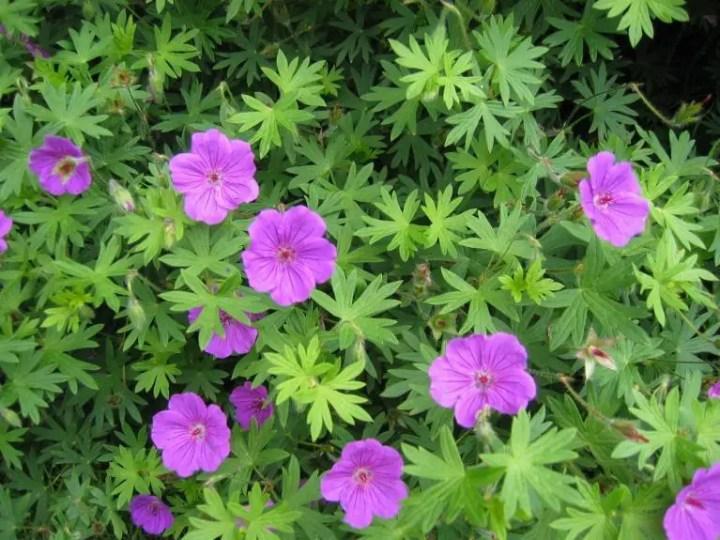 Flori care infloresc in august si toamna devreme