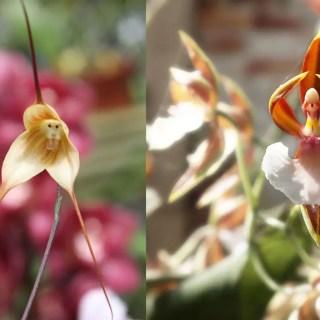 Flori care par a fi cu totul altceva in natura