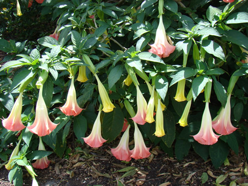 Plante care rezista la temperaturi ridicate vara
