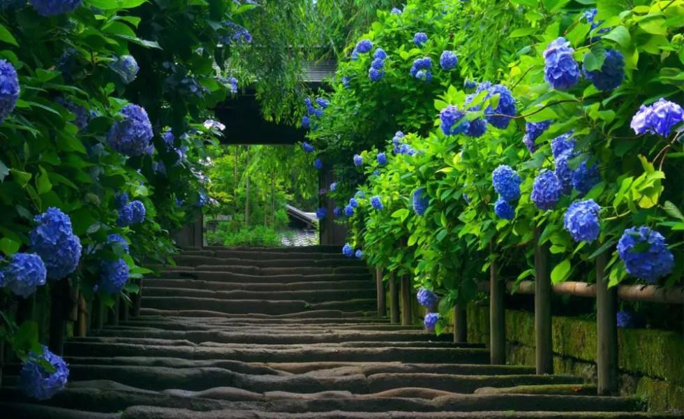 Plante cu flori albastre in gradina