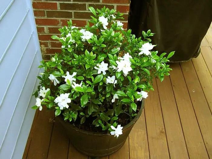 Plante la ghiveci pentru dormitor, care te ajuta sa dormi usor