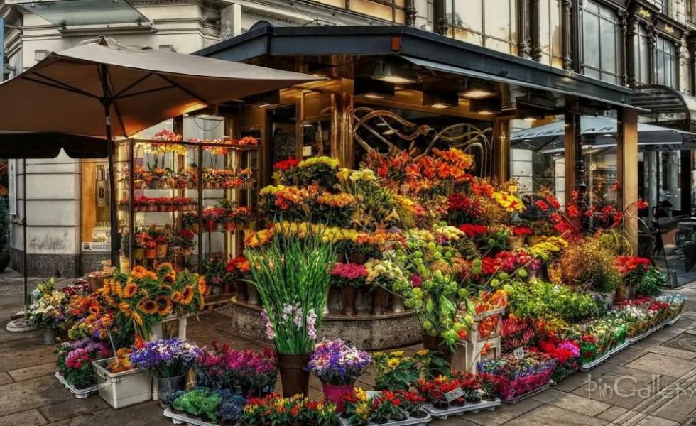Afaceri cu flori la ghiveci profitabile