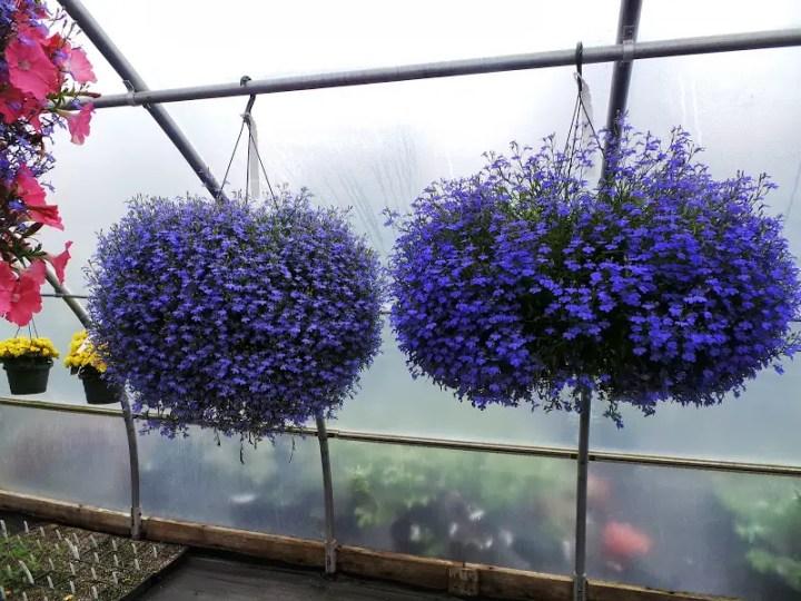 Plante pentru ghiveci suspendat pe terasa
