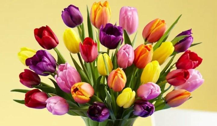Flori care simbolizeaza libertatea absoluta