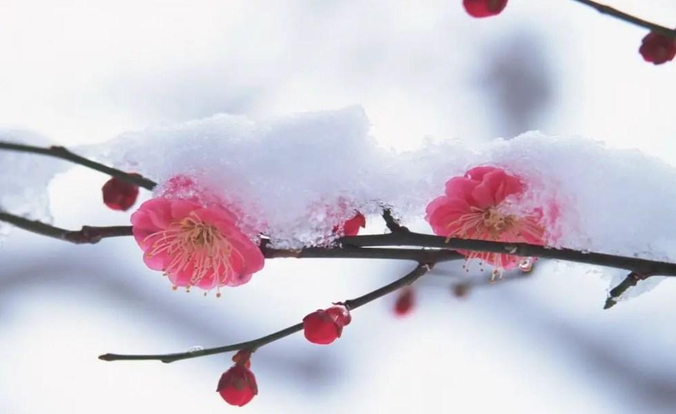 Flori de iarna pentru balcon si pervaz