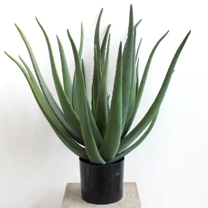 Plante potrivite pentru camera copilului acasa