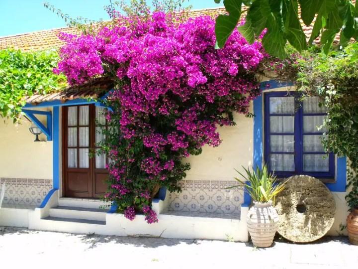 Flori specifice grecie insorite
