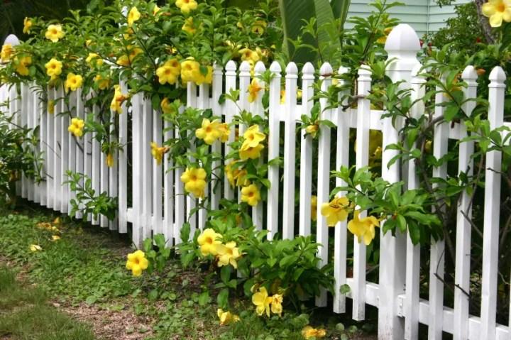 Gardulete din lemn pentru gradina acasa