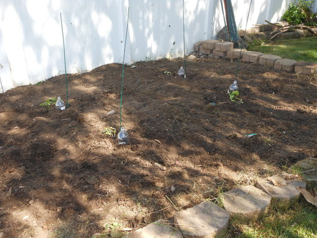 Udarea prin picurare diy drip irrigation systems 6