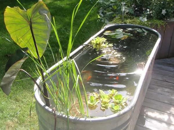 iazuri de gradina Garden pond design ideas 4