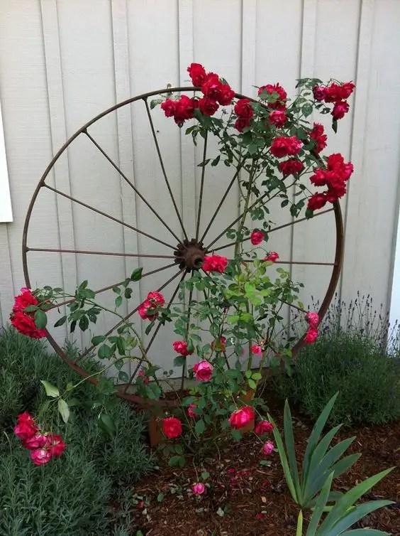 Bolte pentru trandafiri cataratori - forme, culoare si mireasma