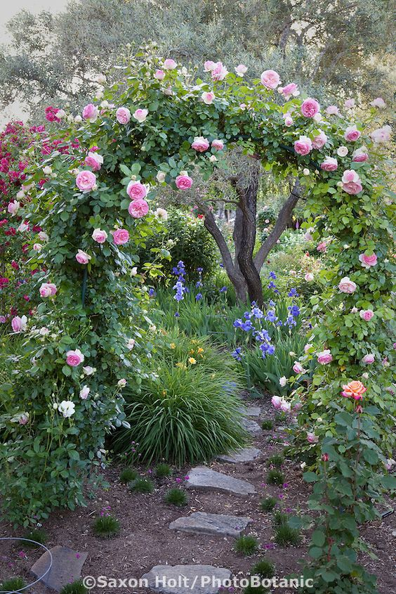 bolte pentru trandafiri cataratori Climbing rose trellis 4