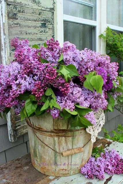 gradini rustice cu flori Rustic flower gardens 14