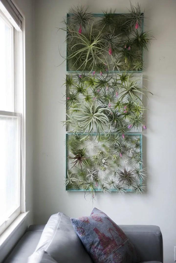 decoruri elegante cu plante care cresc fara pamant Elegant ways to display air plants in your home 14