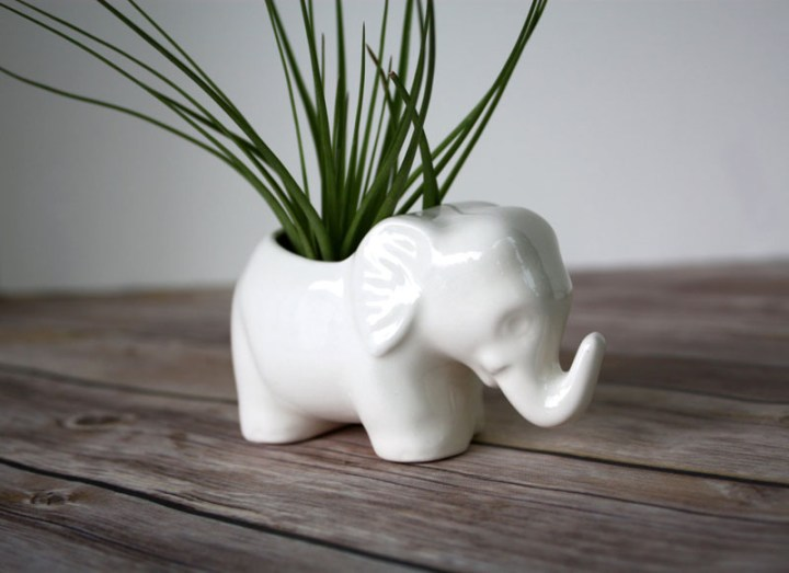 decoruri elegante cu plante care cresc fara pamant Elegant ways to display air plants in your home 4