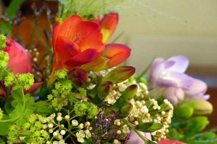 flori de pus toamna in gradina frezie