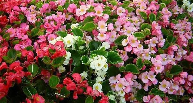 flori care se planteaza in aprilie