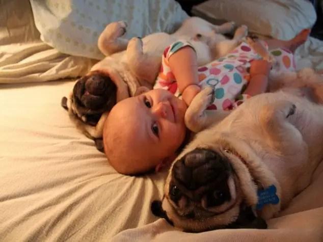 cele mai bune rase de caini cu copiii