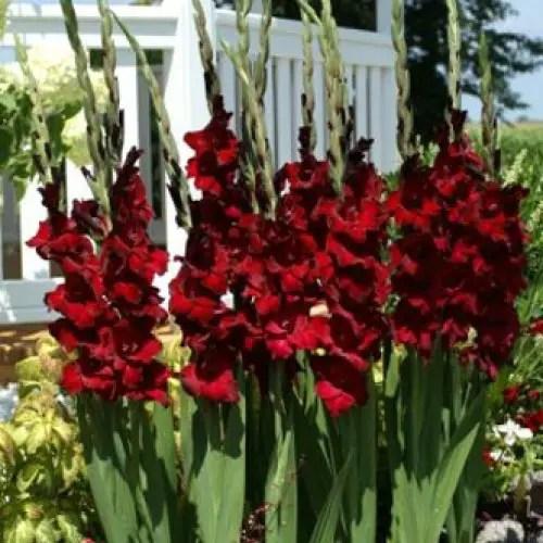 flori care se planteaza in mai