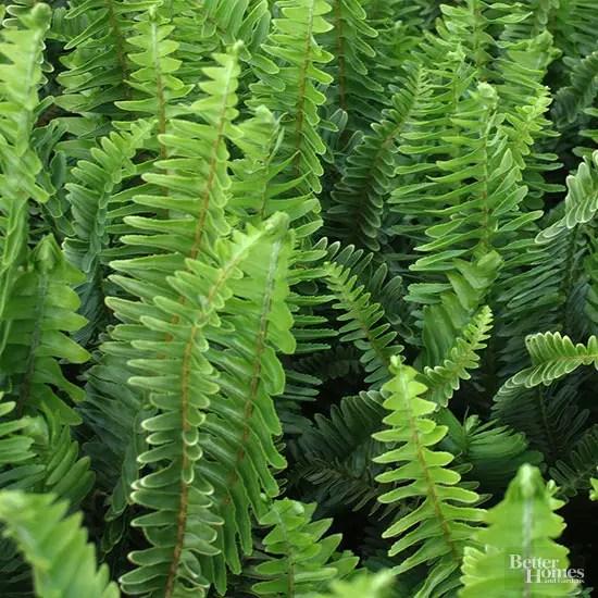 Nu mai ai loc pe pervaz iat ce plante de interior cresc for Plante de interior