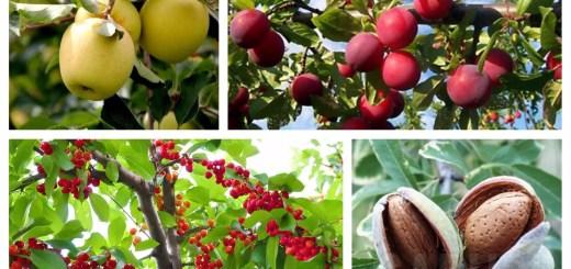 cei mai rezistenti pomi fructiferi