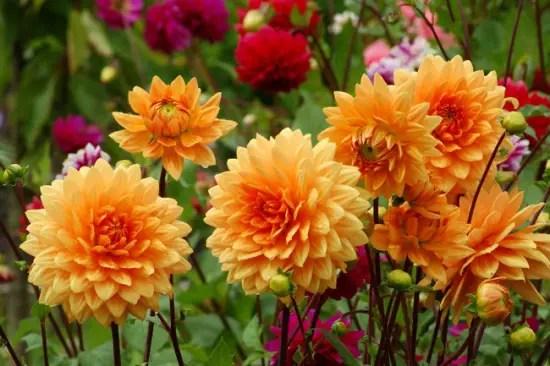 flori care infloresc in septembrie