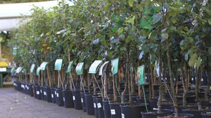 plantarea pomilor toamna