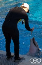 Siegfried & Roy's Secret Garden and Dolphin Habitat — Dolphin and Trainer