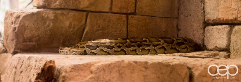 Shark Reef Aquarium at Mandalay Bay — Boa Constrictor