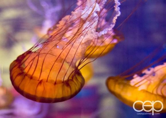 Shark Reef Aquarium at Mandalay Bay — Jellyfish