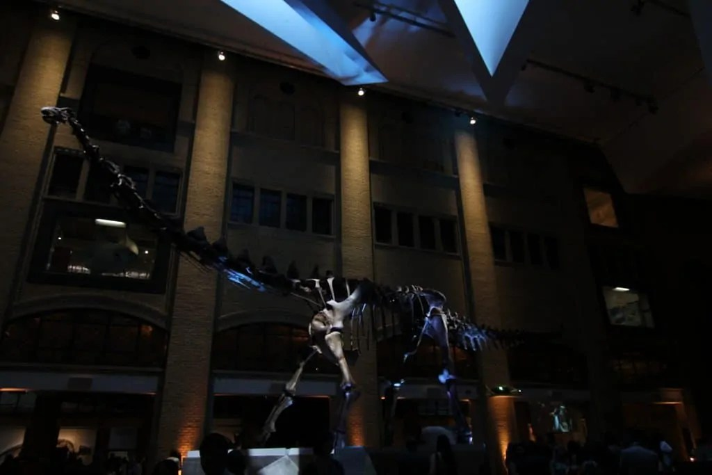 Royal Ontario Museum — FNLROM May 25 2012 — Futulognkosaurus