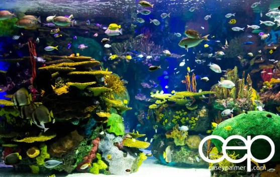 THE MONTHS OF 'BER — On Leave — Ripley's Aquarium of Canada — Seascape