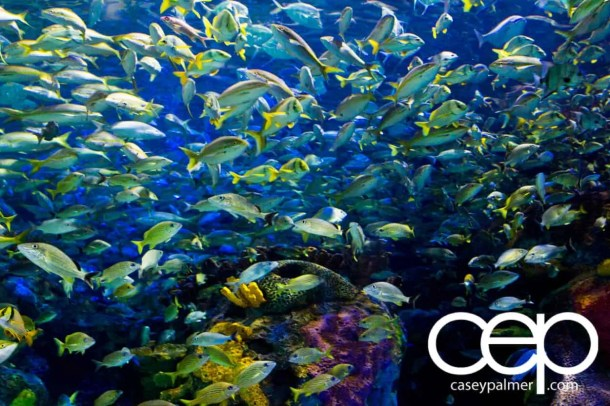 THE MONTHS OF 'BER — On Leave — Ripley's Aquarium of Canada — School of Fish