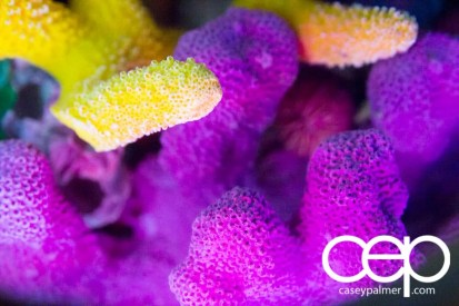 THE MONTHS OF 'BER — On Leave — Ripley's Aquarium of Canada — Coral