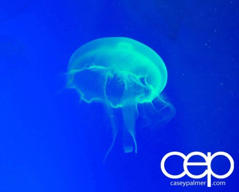 THE MONTHS OF 'BER — On Leave — Ripley's Aquarium of Canada — Jellyfish