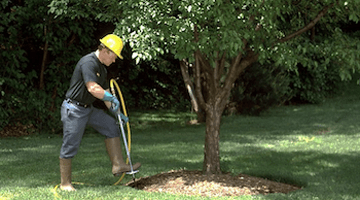 soil health casey tree service experts metro atlanta lilburn