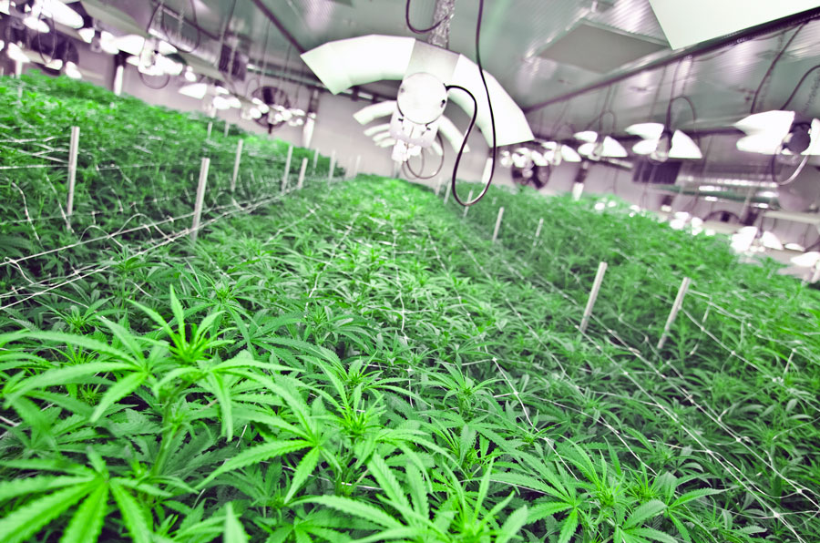 MedReleaf Purchases 1M sq. ft. Greenhouse Cultivation Facility