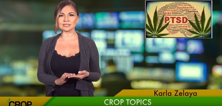 CashCropToday | Crop Topics | Is THC Being Used To Treat PTSD?