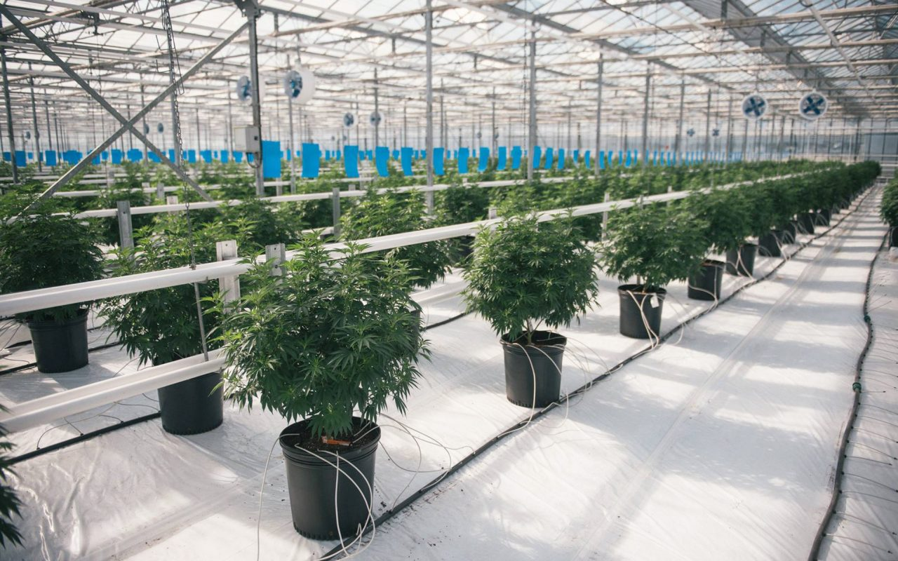 Canopy Growth Corp. Doubles Production Capacity with New Licenses