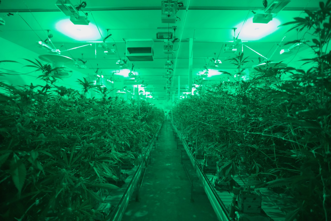 420 Real Properties- Licensed, Legal & Profitable Cultivation, Manufacturing & Distribution Facility in Adelanto, CA