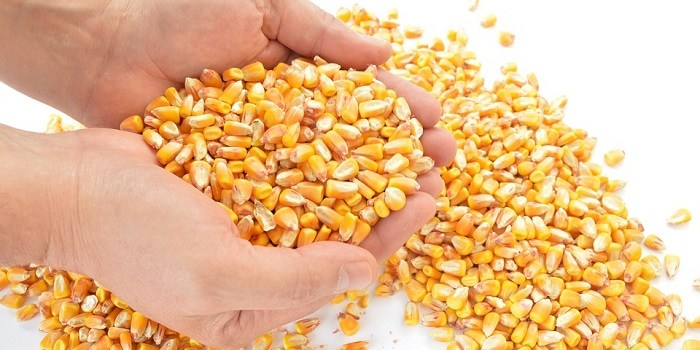 Don't let a rental eat your seed corn