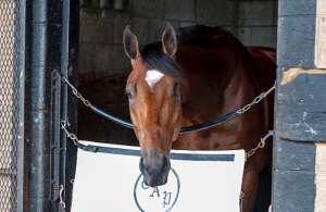 Kentucky Derby Betting Odds netbet