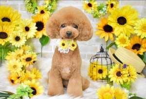 Dogpose, cute, puppy, dog, dressed up dog, cute animal