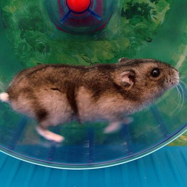 Stuck in the Hamster Wheel