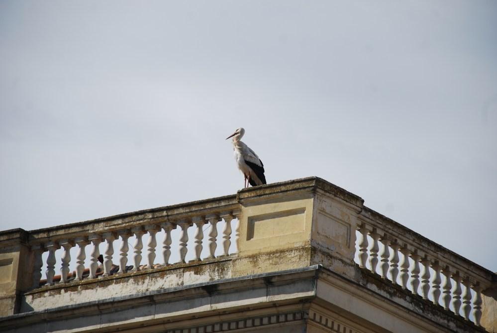 Cigüeñas de Alcalá de Henares (4/6)