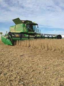 Here, the JD S680 combine gathers  and threshes a 40-foot swath of soybeans.  The soybean variety is Asgrow 3731.